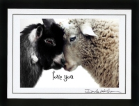 Click on the lambs for more Animal Cards